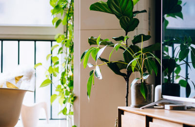 vegetaliser-espace-bien-etre